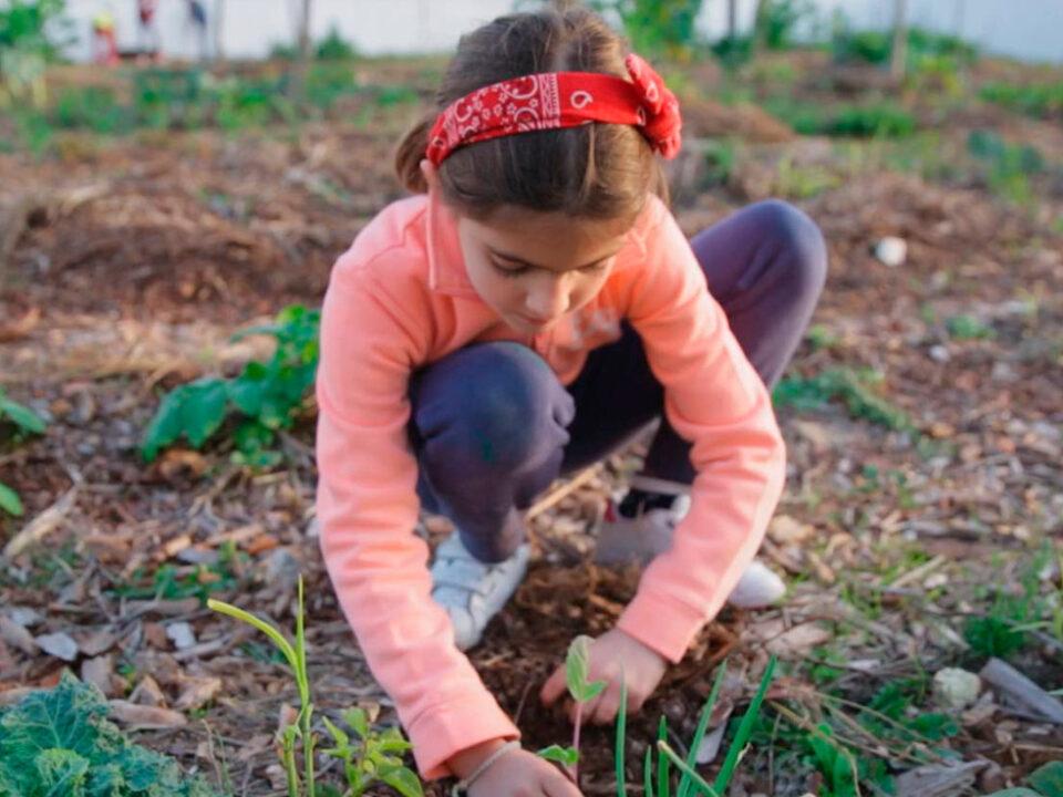 Hortas Floresta nas Escolas